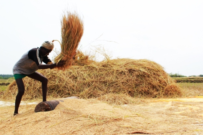 farmer+hand+threshing