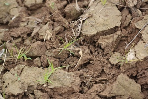 Mark 4-20 cracked soil