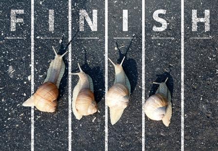 Snail Run Near The Finish Line
