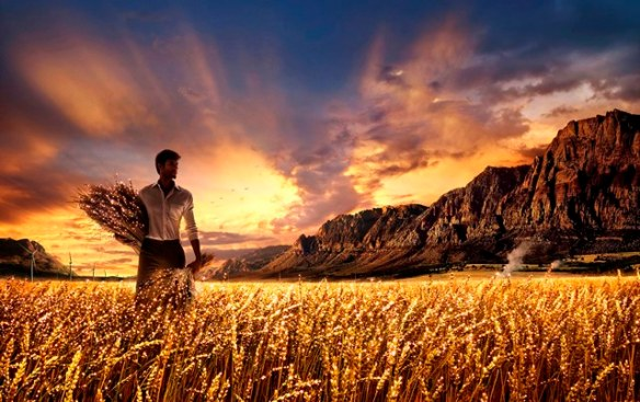 Harvest worker